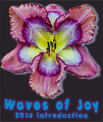 H. 'Waves of Joy' 2013 introduction from Dan Trimmer